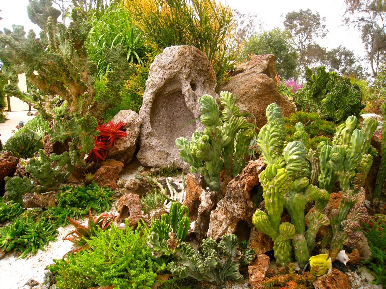 Undersea at san diego botanic weekend del sol for Garden images
