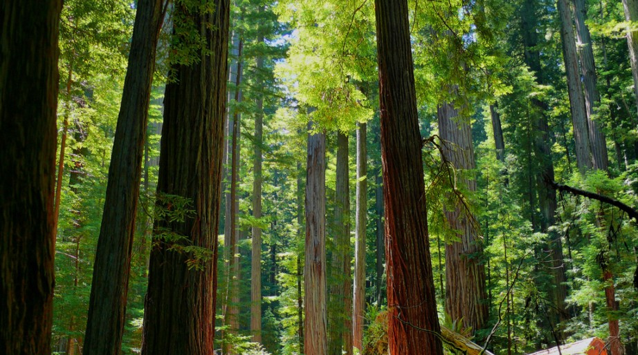 Humboldt Redwoods State Park Credit Rene Rivers